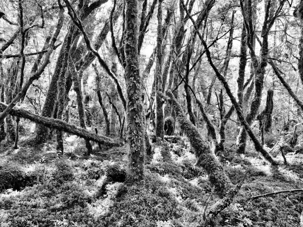 Wälder